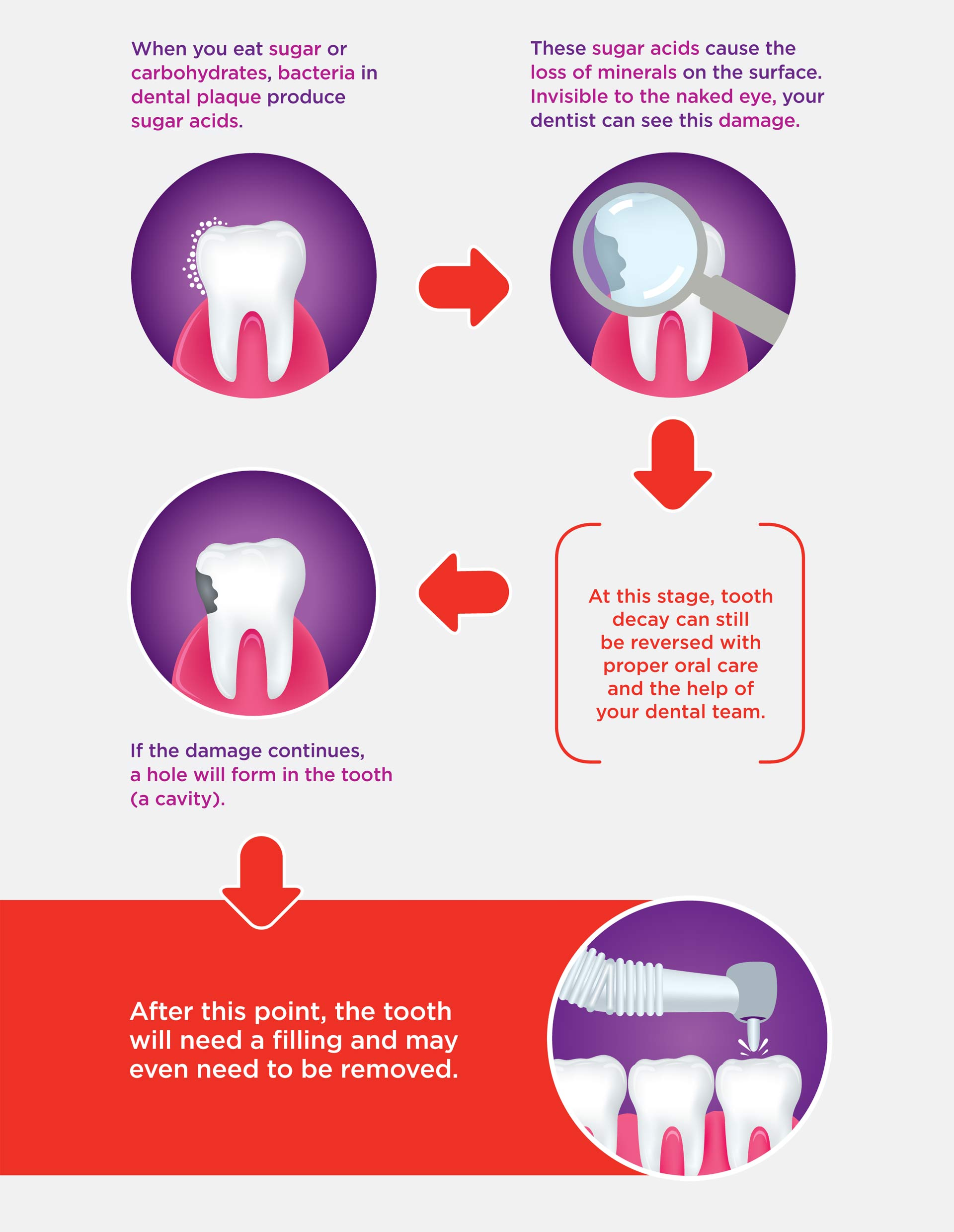 Colgate infographic, section two
